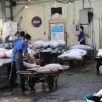 Tuna @ Tsukiji fish market 築地市場のまぐろ