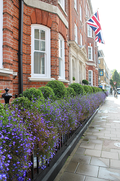 Flowers on the street in London